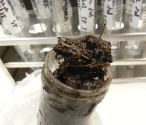 Wetland sediment sample to be processed for influenza typing